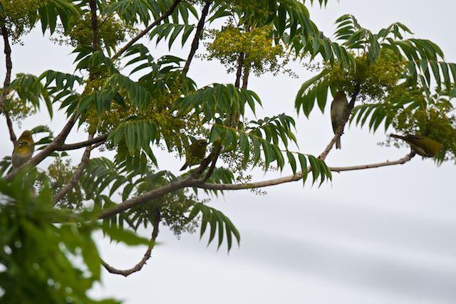 瀬上市民の森 5羽のメジロ1 _DSC7488.jpg