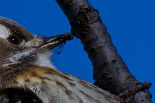 舞岡公園 拡大すると羽があります _DSC2004.jpg