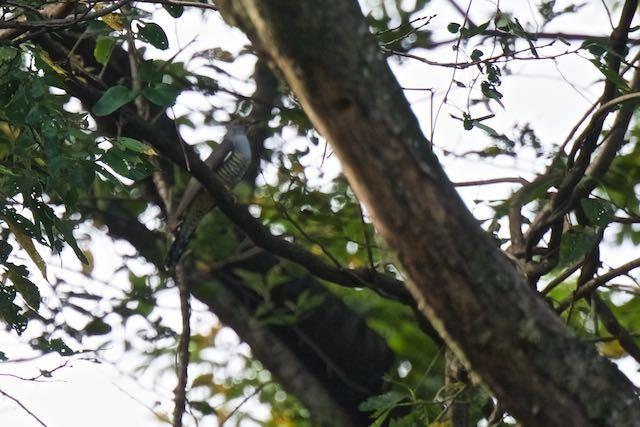 舞岡公園 狐久保で見られたトケン類(10日) _DSC2146.jpg